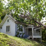 How to deal with a fallen tree in Eugene, OR