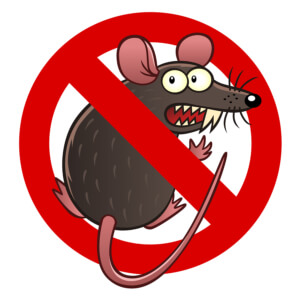 Rodent damage coverage for your car in Eugene, OR
