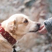 Liability Insurance for Dog Bite Claims Eugene, OR