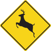 How to lower your risk for a deer collision in Eugene, OR